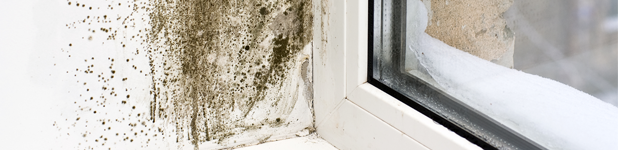 Window Seal With Dampness And Mold