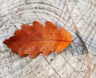 Autumn Leaves Around House When Is The Best Time To Sell A House